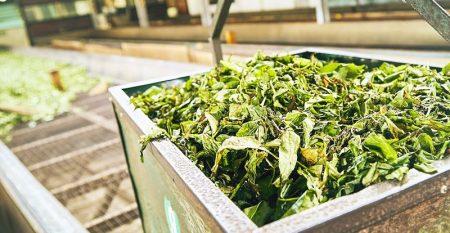 curso gratis comprar té de calidad